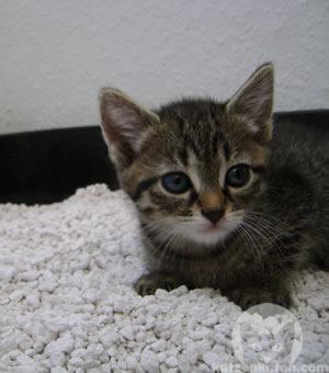 Für Katzenkinder besser geeignet: Grobkörnige Katzenstreu