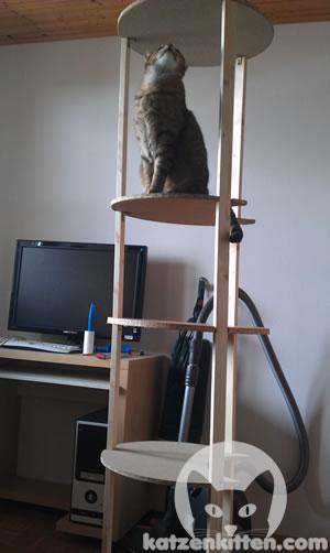 Katze auf untertiger Kratztonne