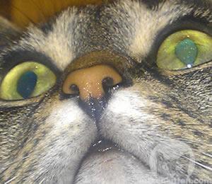 Eine gesunde Katze mit feuchter Nase