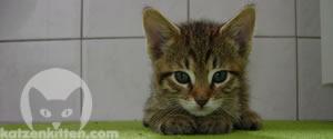 Eine gesunde Katze mit offenen Augen