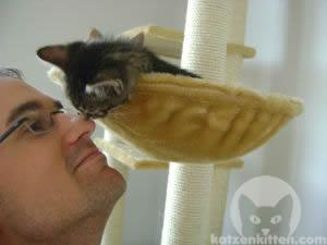 Katze näselt