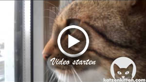 Eine Katze schnattert
