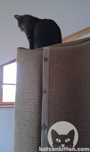 Katze sitzt auf Kratztonne