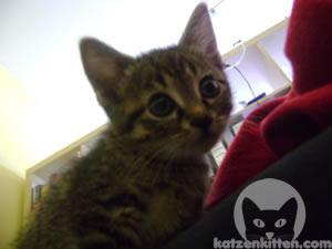 Katze starrt mit weiten Pupillen