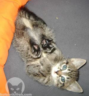 Katze zeigt Pfoten