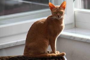 Xeni's Amber von Dorlomin, unsere fawnfarbene Prinzessin