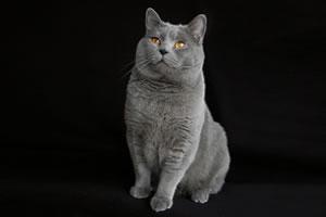 Karteuser Katze