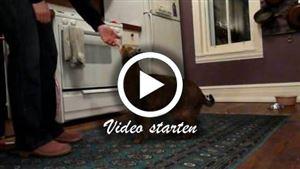 Eine Chausie-Katze macht unterschiedliche Tricks