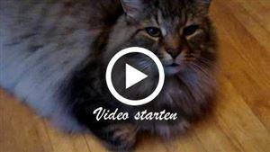 Eine Maine-Coon Katze spricht mit ihrer Besitzerin