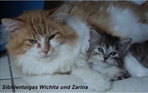 Die Sibirischen Katzen Wichita und Zarina