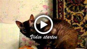 Ural Rex Katzen