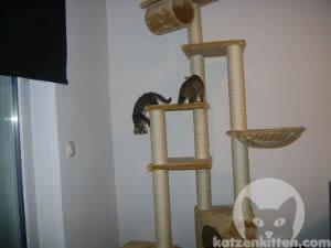 hier lernst du wie du den idealen kratzbaum f r katzen findest. Black Bedroom Furniture Sets. Home Design Ideas