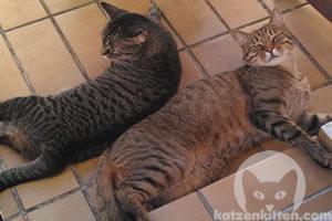 Lange Katzen