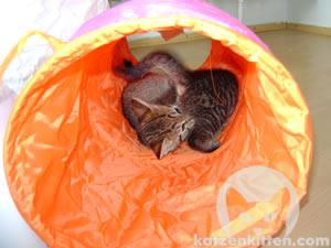 Kleine Katzen lieben den Rascheltunnel!