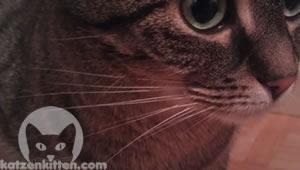 Die Schnurrhaare einer Katze